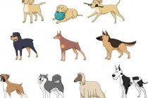 Unsere 5 besten Hunderassen für Anfänger