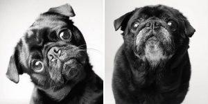 Wenn Hunde alt werden