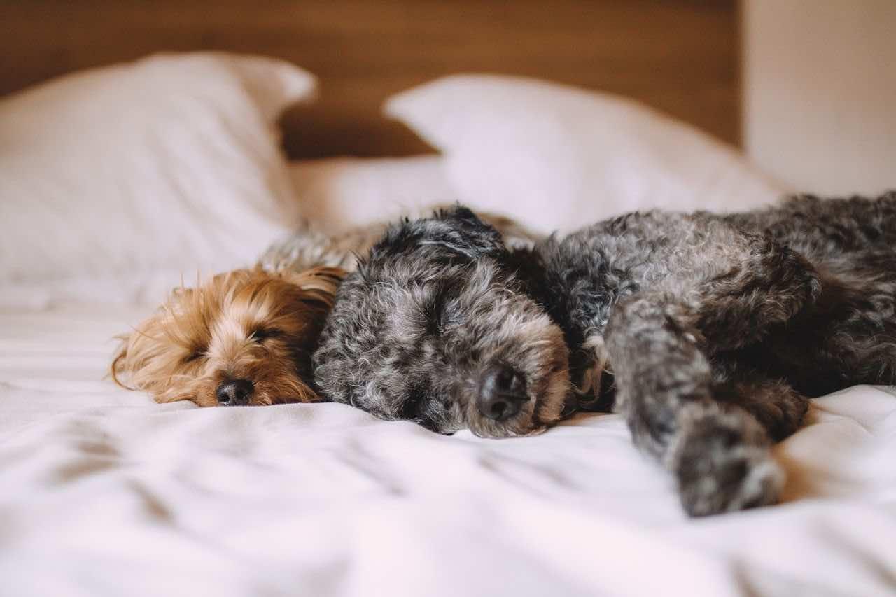 Liebt mein Hund mich? 12 überraschende Gesten, wie Ihr Hund
