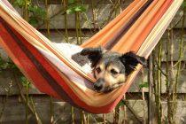 Spürt mein Hund, wenn ich traurig bin?