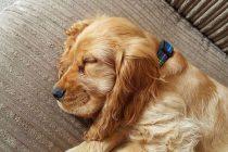 Wie viel Schlaf braucht mein Hund?