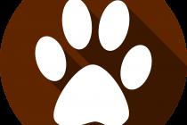 Die 5 besten Apps für Hundefreunde