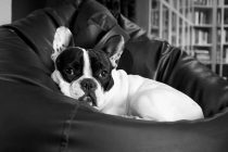 Was ist zu tun, wenn der Hund nicht alleine bleiben will?