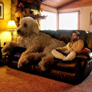 giant-dog-photoshop-adventures-juji-christopher-cline-87