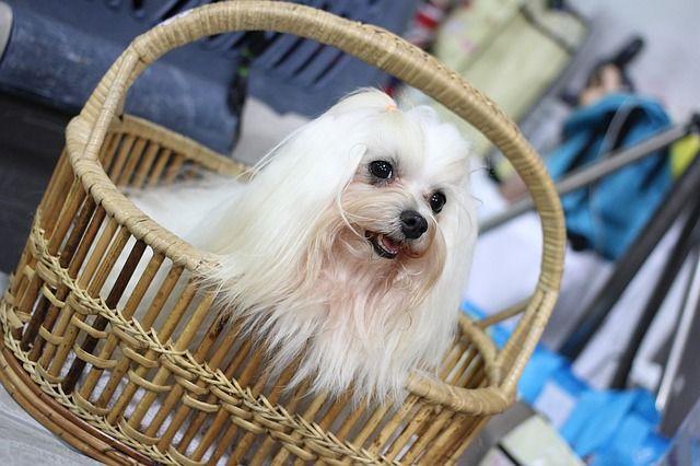 13 Tipps Fur Perfekte Hundefotos Doglike