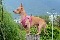 13 Tipps für perfekte Hundefotos