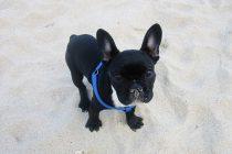 Welthundetag – Das sind die beliebtesten Hunderassen
