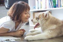 Das Fell vom Hund stinkt? Eine gute Fellpflege reduziert Hundegeruch erheblich
