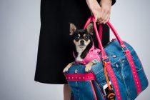 Fliegen mit kleinem Hund bis 6 kg