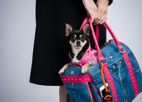 Hundetasche ideal zum Vereisen