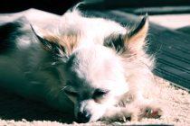 Pflege der Hundehaut und des Fells nach Alter