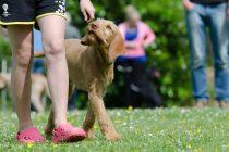 Die 7 größten Fehler bei der Hundeerziehung und die Lösungen!