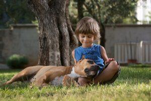 Kampfhunde und Kinder