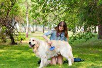 Fellpflege bei Hunden – Tipps und Wissenswertes