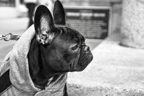 Hundemantel mit Bauchschutz im Herbst und Winter – Sinnvoll oder ein Spleen