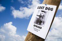 Vermisste Hunde: Wie ertrage ich den Verlust meines besten Freundes