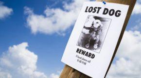 vermisste Hunde