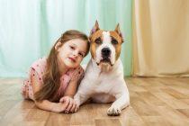 Wie intelligent sind Hunde tatsächlich?  Was sind die intelligenten Hunderassen ?