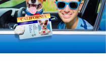 Hundeführerschein fragen, Hundeführerschein Test und Sachkundenachweis hund: Alphabetisches Glossar