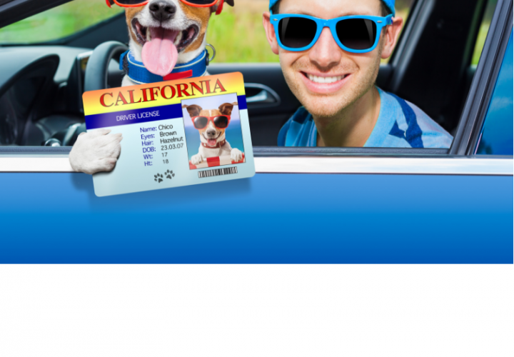 Hundeführerschein test