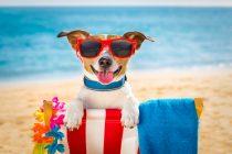 Urlaub mit Hund am Meer oder in den Bergen