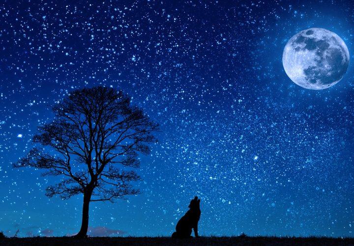 Ihr Hund weckt Sie mitten in der Nacht? 5 Gründe, woran es liegen kann!